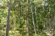 Nature-and-Culture-Trail-Eriksberg-forest audioguide